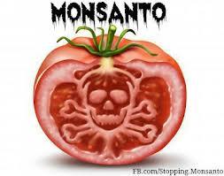 Monsanto Tomatoe